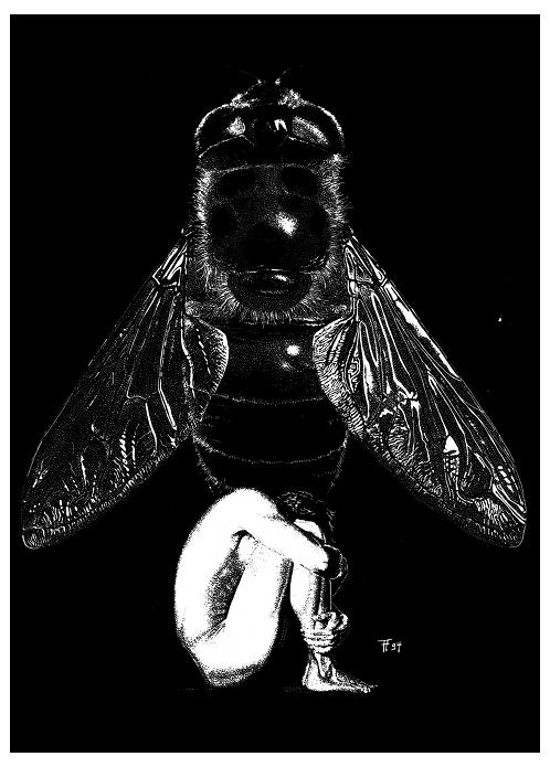 Fabian Fröhlich, Illustration, Michael Siefener, Fliegen, Dandelion