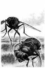 John Sinclair, Die Bestien aus dem Geister-Sumpf
